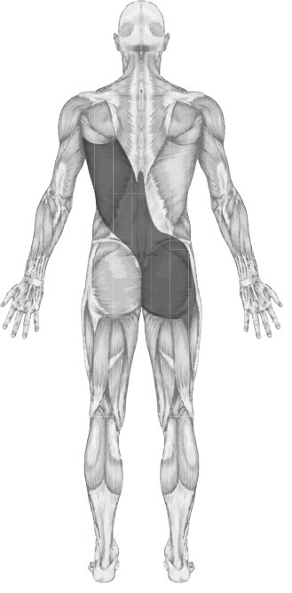 anatomy dimensions courses