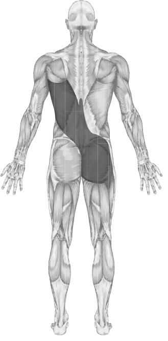 Anatomy Of A Combine : Anatomy dimensions courses australia pilates body organics