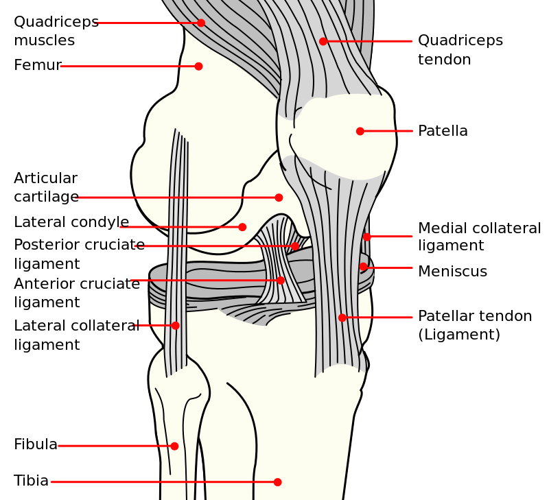 physio treatment for ACL injury