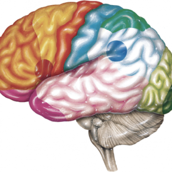 Introduction to Neuro Anatomy online ourse